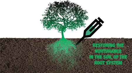 Deep Root Fertilization In Fort Worth Tx Tree Care Pros