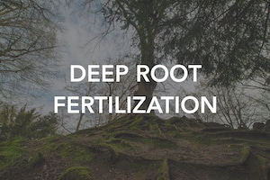 Deep Root Fertilization Can Improve the Health and Life of Your Trees